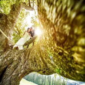 Hochzeit Baum