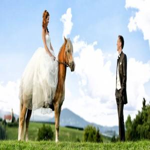 Karl Schrotter Hochzeit Pferd